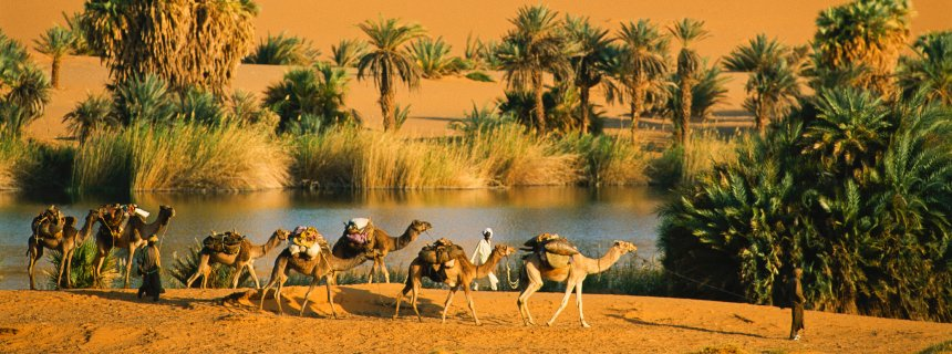 Small caravan of camels passing oasis of Ounianga Serir oasis complex